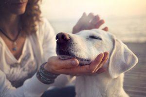 hundens tarmsystem